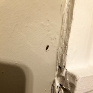 Getting Rid of Small Grey Bugs - appears to be a sow bug
