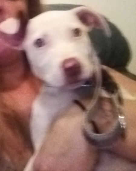 What Breed Is My Dog? - fuzzy photo of a white puppy