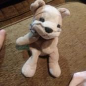 Identifying a Stuffed Plush Dog - cute stuffed dog