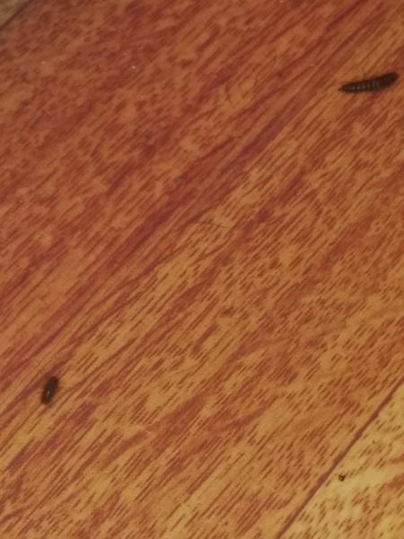 Identifying Household Bugs
