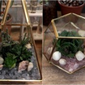 How to Make a Plant Terrarium - finished succulent terrariums made with brass edged glass containers