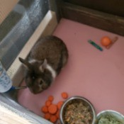 Treating a Sneezing Rabbit - cute brown rabbit