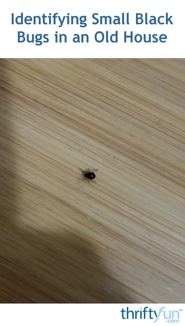 Identifying Small Black Bugs in an Old House? | ThriftyFun