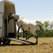 A horse being loaded in a trailer.