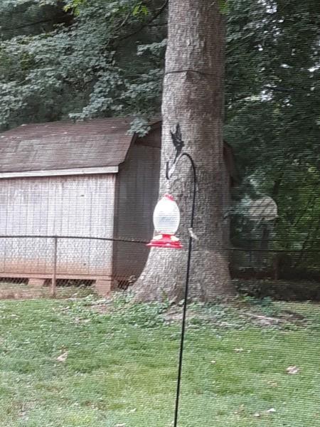 Keeping Yellow Jackets off Hummingbird Feeders - feeder in yard