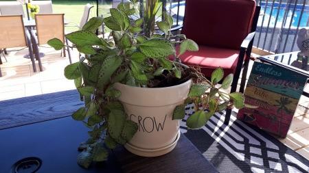 Identifying a Houseplant