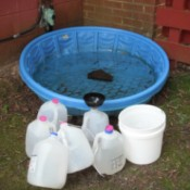 Catch Rain Water for Plants in a Baby Pool - jugs, bucket, pool straight on shot