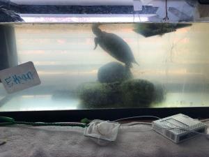 Cloudy Turtle Tank - cloudy water in tank