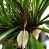 Identifying a Houseplant - closeup of medium green foliage plant