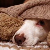 A scared dog hiding under a blanket.