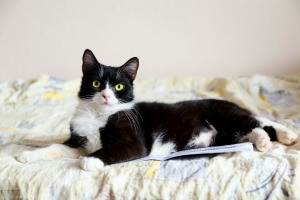 A cat sitting on a a pad of paper.