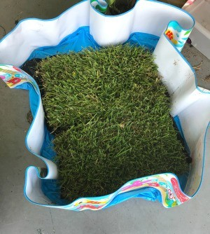 Dog Potty Spot Made from Sod Squares - sod in a pool