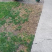 New Sod Dying - large brown area where grass should be