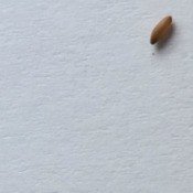 Larva found on bed sheets.