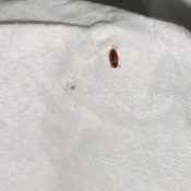 What Kind of Bug Is This? - dead bug