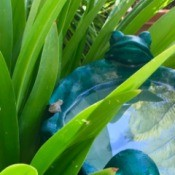 Incognito (Tiny Frog on Bird Bath) - birdbath with frog motif with tiny frog on the edge