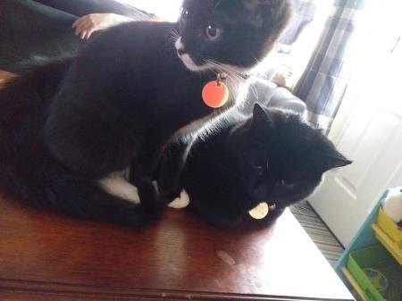 New Kitten Sucking on Year Old Female