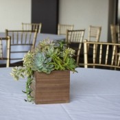 Succulent Wedding Centerpiece - centerpiece on venue table