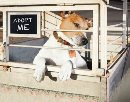 A dog at a shelter, hoping for adoption.