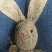 Identifying a Stuffed Bunny - head and ears of a well loved stuffed bunny