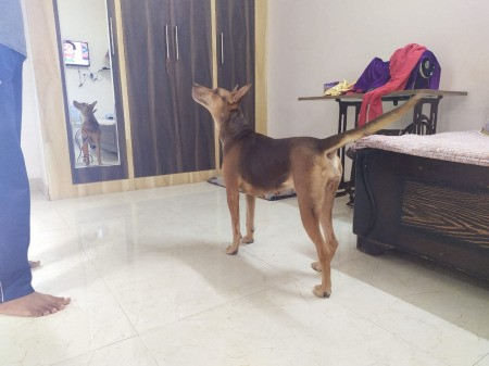 Dog standing in a room.