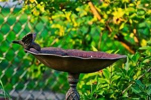 A metal birdbath.