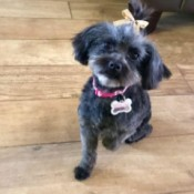 What Breed Is My Dog? - small black dog