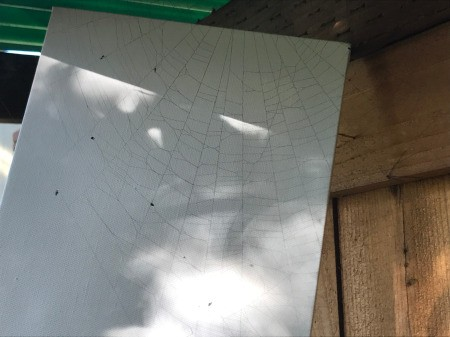 Catching a Spider Web - spray both sides of the web with black paint, and bring the canvas up against the web, carefully while the paint is still wet