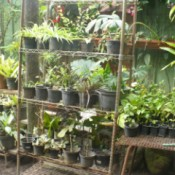 Use Old Storage Racks In Your Garden - plants in pots on metal shelves