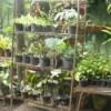 Use Old Storage Racks In Your Garden - plants in pots on metal shelves