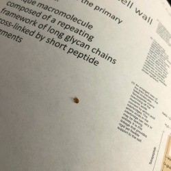 Identifying a Tiny Brown Bug