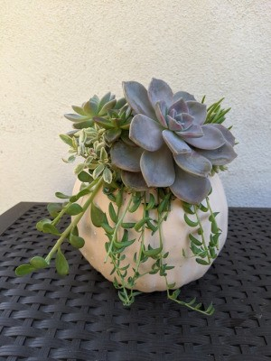 Foam Pumpkin Succulent Planter - planter on woven mat