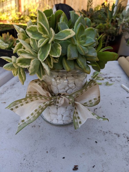 Succulent Jar Centerpiece - finished jar, filled with white rocks, rosette type succulents in different colors, and tied with a white and green patterned ribbon
