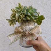 Succulent Jar Centerpiece - hand holding finished jar
