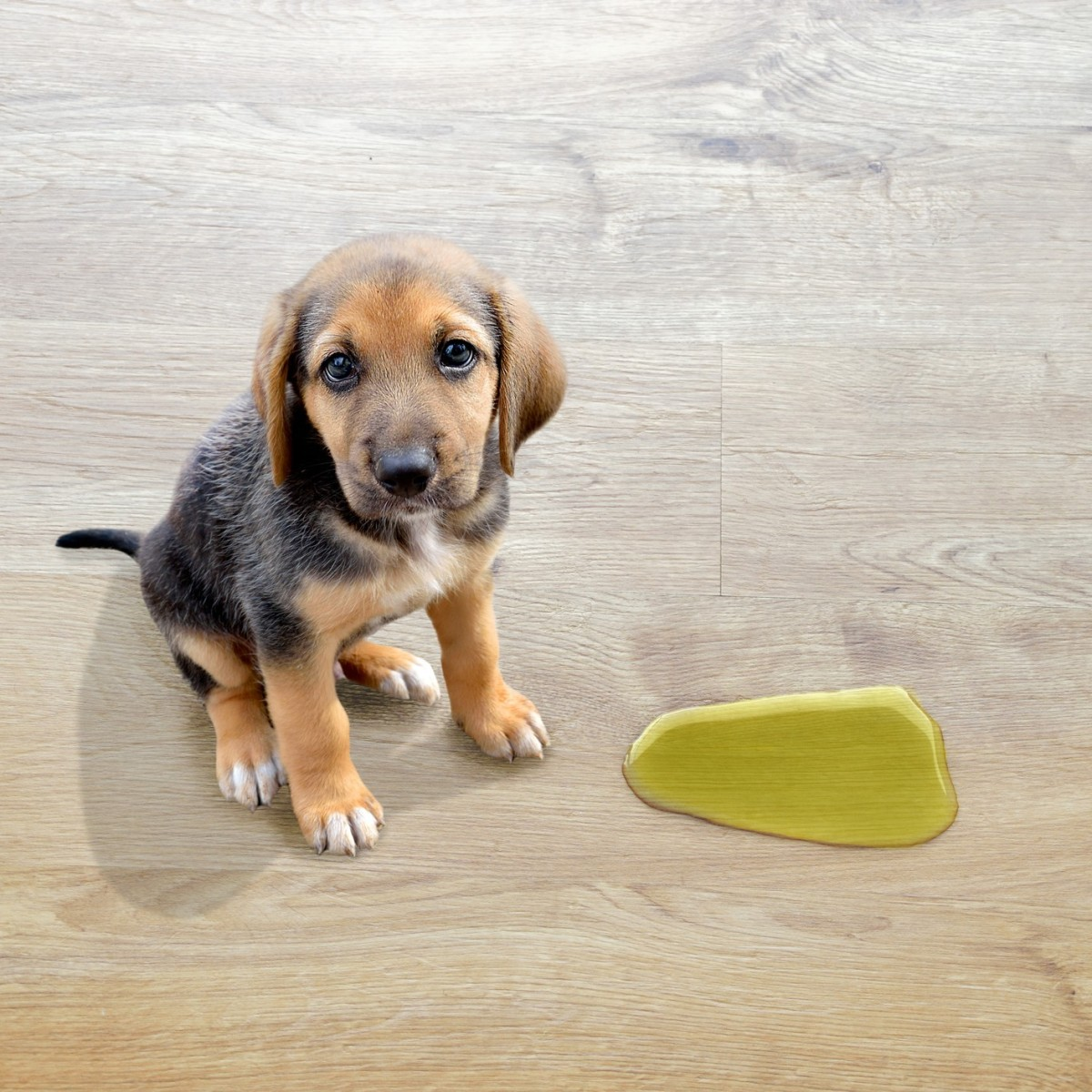 Cleaning Pet Urine Stains And Odors