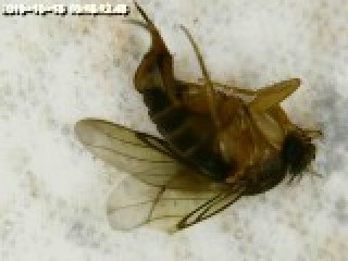 Identifying Tiny Flying Insects