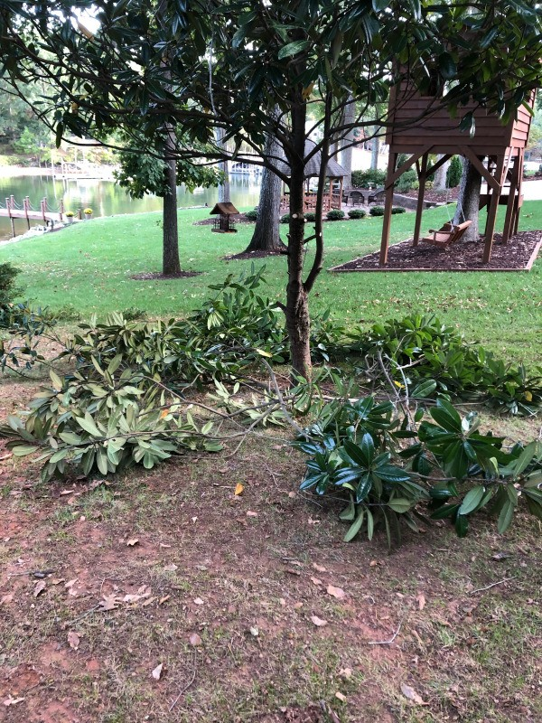 Easy Tree Limb Clean Up  - branches lying under trees