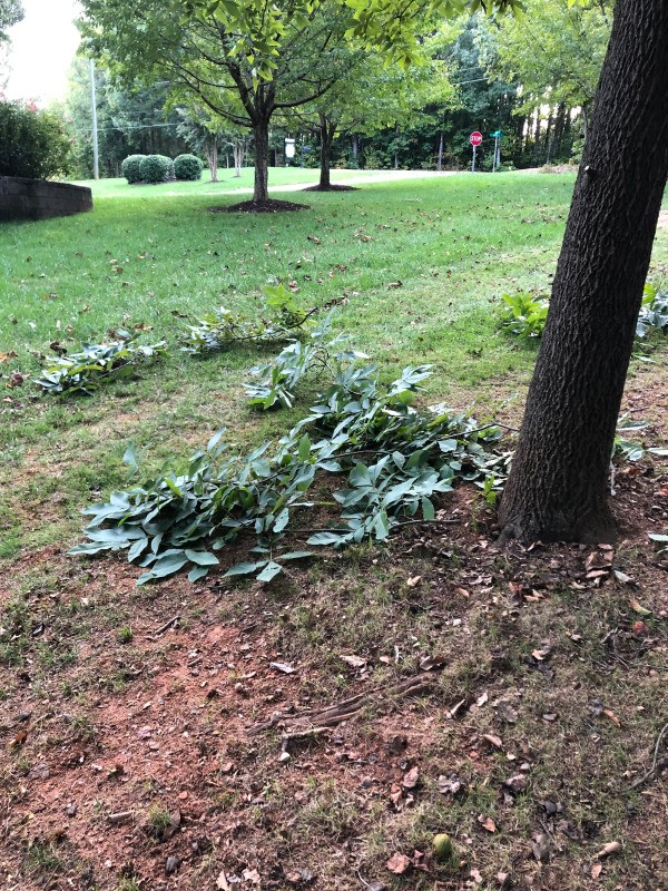 Easy Tree Limb Clean Up - another pile of branches