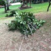 Easy Tree Limb Clean Up - off they go