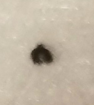 Identifying Brown Fuzzy Bugs - fuzzy bit, bug?