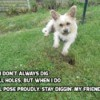 Gus (Terrier) - white terrier mix with text spoofing the Dos XX beer commercial