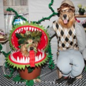 Little Shop of Horrors Costumes - dog dressed up as plant and one as Seymour