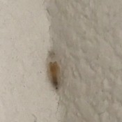 Identifying a Bug - a bug or eggs in a corner