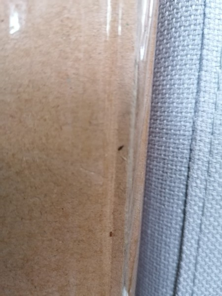 Identifying Bugs on New Bed