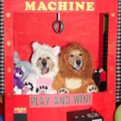 Claw Machine with Stuffed Animal Costumes - dogs in costume in the machine