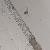 Identifying Small Brown Bugs