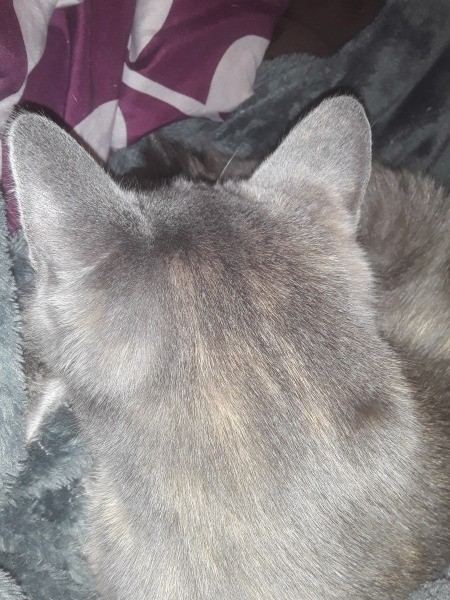 What Breed Is My Cat?