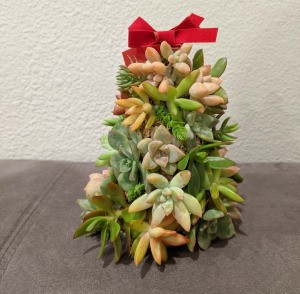 Baby Succulent Christmas Tree