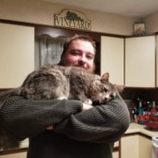 Zelda (Mixed Breed Cat) - man holding a pretty cat