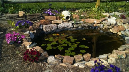 Our Pond - in-ground goldfish pond with water lilies and flowers planted around the sides